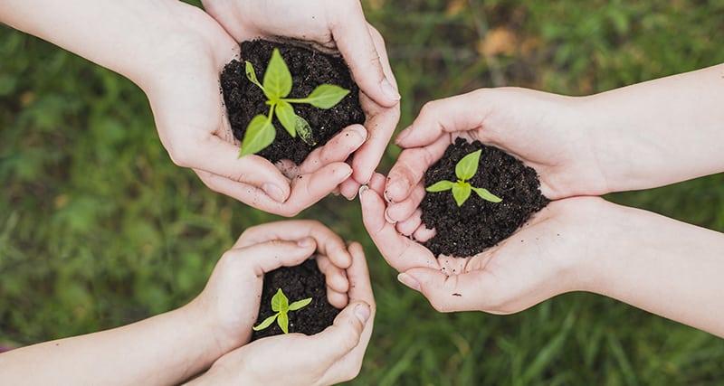 Como aplicar sustentabilidade na escola: 5 boas práticas para despertar a consciência e responsabilidade ambiental